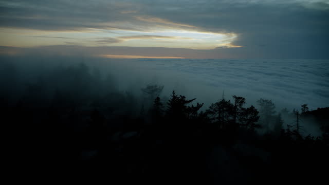trees rise above clouds at twilight - dusk stock videos & royalty-free footage