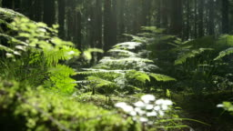 SLOW MOTION: Trees, roots and moss in the sunny woods