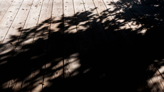 vídeos de stock e filmes b-roll de trees shade motion on wooden floor 4k dci - com sombra