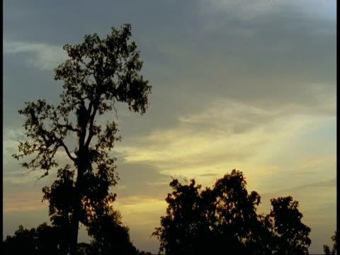 wa trees silhouetted against sunset sky, bandhavgarh national park, india - national icon stock videos & royalty-free footage
