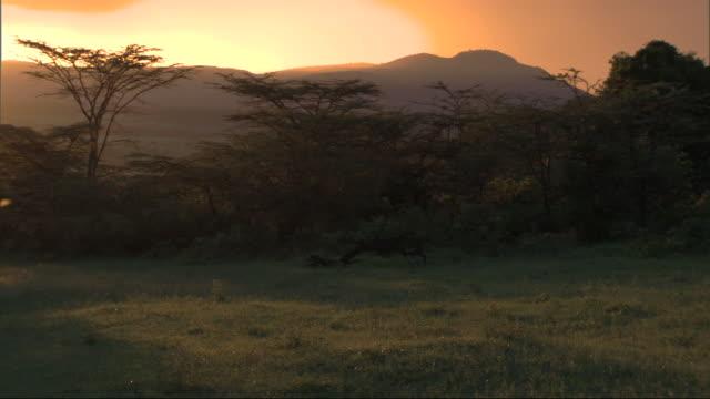 stockvideo's en b-roll-footage met trees silhouetted at sundown, with wild sound of birds, kenya, africa - donker beeld