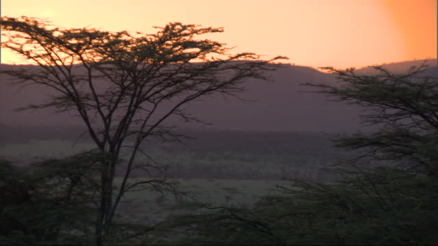 vídeos de stock e filmes b-roll de trees silhouetted at sundown, with wild sound of birds, kenya, africa - árvore tropical