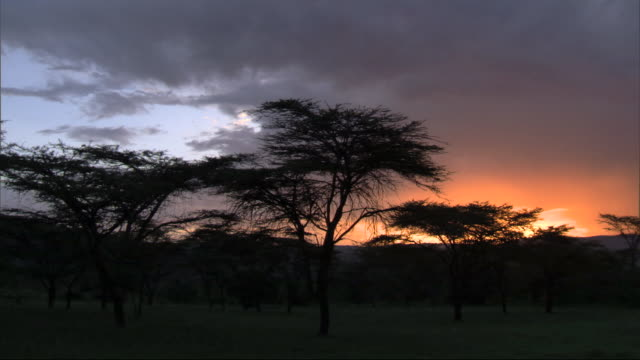 Trees silhouetted at sundown, with wild sound of birds, Kenya, Africa