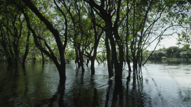 trees stand in the middle of flood waters. - tree trunk stock videos & royalty-free footage