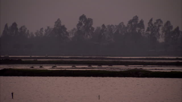 trees stretch along the shore of a lake. - tay ninh stock videos & royalty-free footage