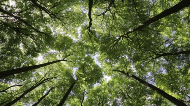 stockvideo's en b-roll-footage met trees sway gently in the wind - low angle view