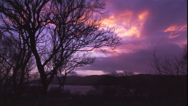 trees sway in the breeze against a purple twilight sky. - hebrides stock videos & royalty-free footage