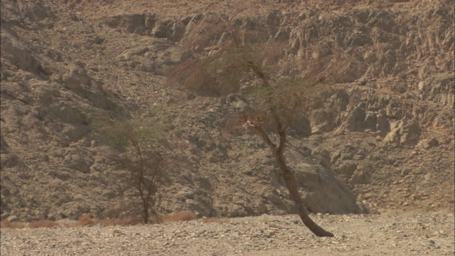 Trees sway near a rocky hill in Sikait, Egypt.