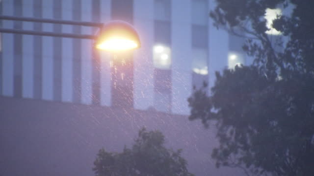 trees swaying in storm, tokyo, japan - minato ward stock videos & royalty-free footage