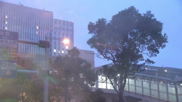 trees swaying in storm, tokyo, japan - gale stock videos & royalty-free footage