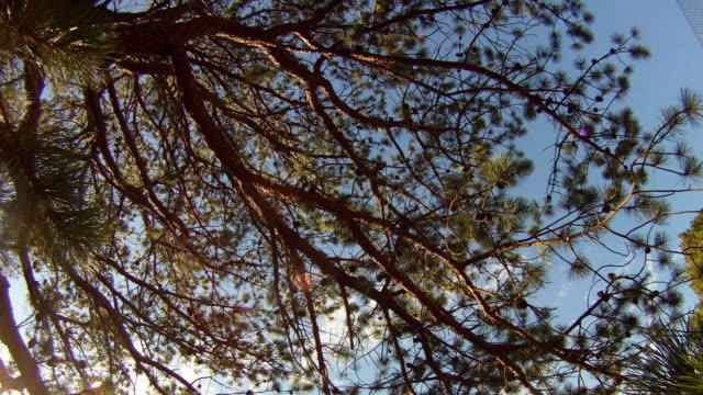 t/l trees swaying in wind with clouds rolling by / bridgehampton, new york - bridgehampton stock videos & royalty-free footage