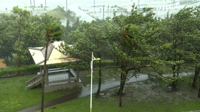 trees thrash in building winds as typhoon megi nears coast of taiwan on 27th september 2016 - メギ点の映像素材/bロール