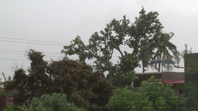 trees thrash in strong winds from super typhoon megi or juan, ne luzon, philippines oct 2010 / audio - record breaking stock videos & royalty-free footage
