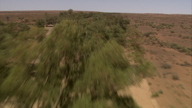 Trees thrive on a dry riverbed in the vast, arid outback in northern Australia. Available in HD.