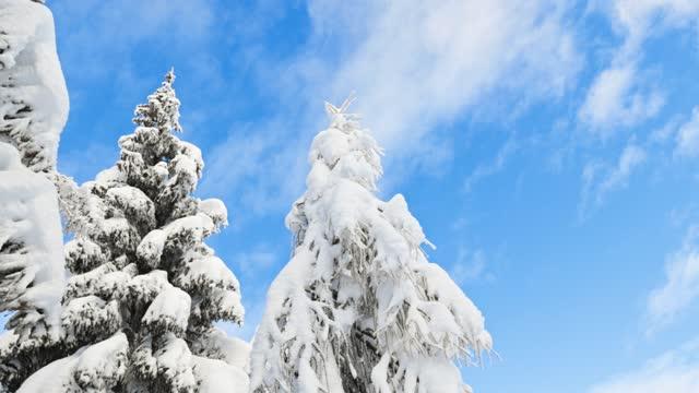 深い雪の下の木々と背景に澄んだ青空 - ウィンターコート点の映像素材/bロール