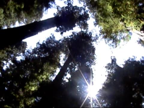 vídeos de stock, filmes e b-roll de árvores  - parque nacional de redwood