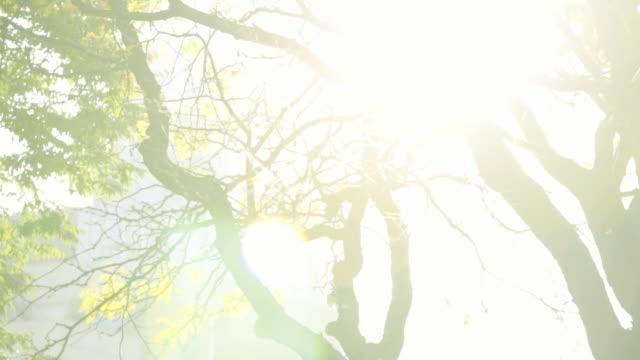 trees - パン効果点の映像素材/bロール