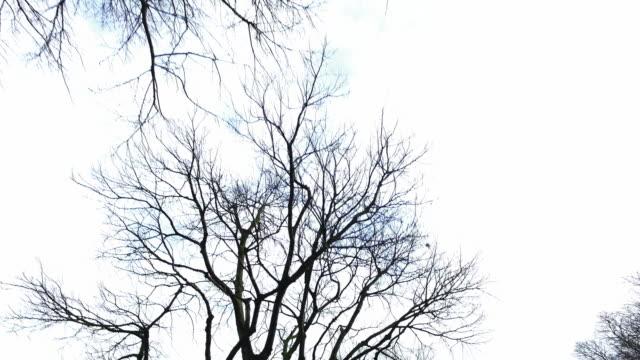 vídeos y material grabado en eventos de stock de árboles  - rama parte de planta
