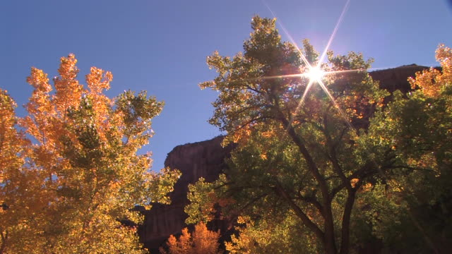 ha ms trees with autumn leaves at bottom of canyon/ canyon de chelly national monument, arizona - canyon de chelly stock videos & royalty-free footage