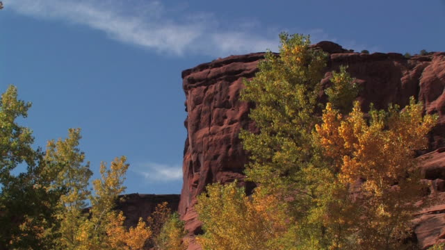 MS Trees with autumn leaves in front of rock wall/ Canyon de Chelly National Monument, Arizona