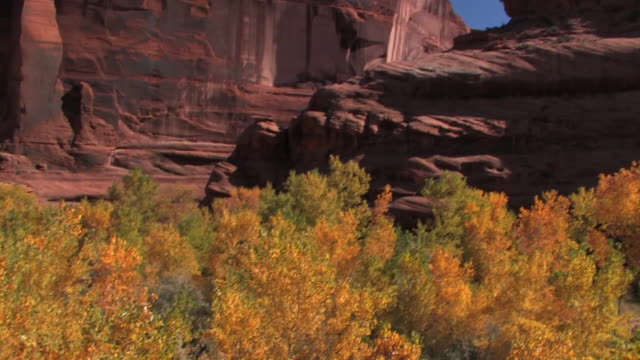 MS Trees with autumn leaves/ TU Sunlight on rock wall/ Canyon de Chelly National Monument, Arizona