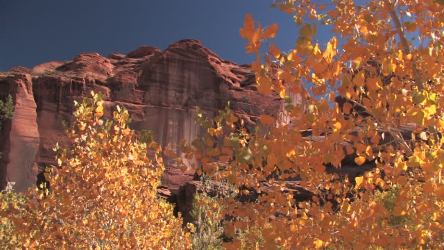 MS ZI Trees with autumn leaves with rock wall in background/ Canyon de Chelly National Monument, Arizona