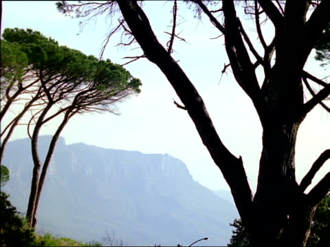 stockvideo's en b-roll-footage met trees with distant mountain range behind, south africa - plant attribute