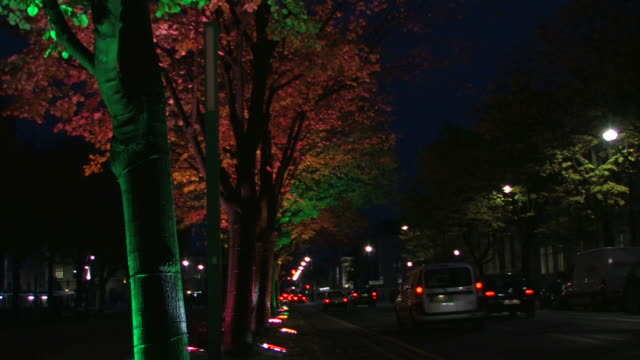 trees with leaves atmospherically illuminated + Audio