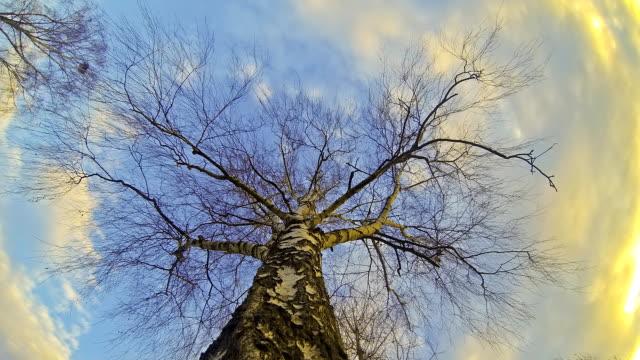 HD-ZEITRAFFER: Baumkrone gegen Wolken
