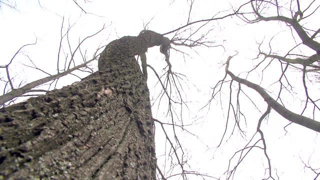 vidéos et rushes de treetop in winter - brindille