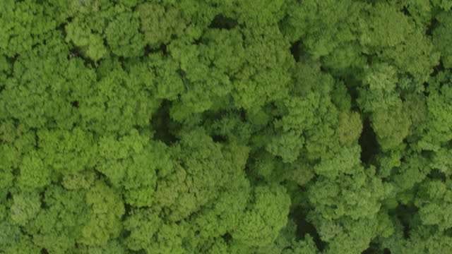 vídeos de stock, filmes e b-roll de ws aerial pov treetop over great smoky mountains / cherokee, north carolina, united states - appalachia