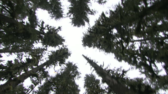 treetops of a forest spiral towards the sky. - treetop stock videos & royalty-free footage