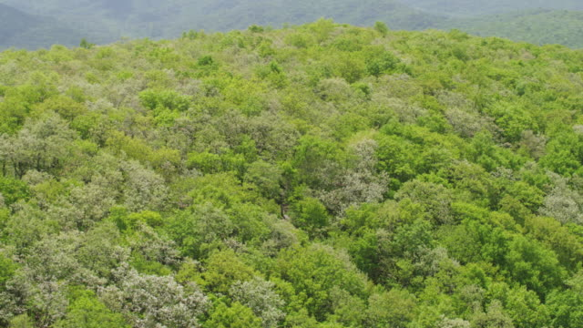WS AERIAL POV Treetops over Blue Ridge Mountains in Chattahoochee-Oconee National Forest / Fannin County, Georgia, United States