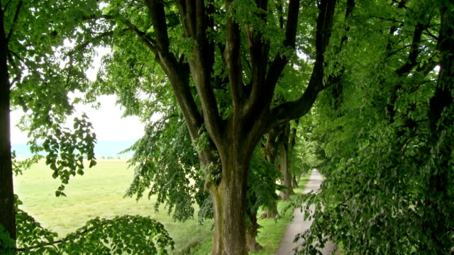hd crane: treetops over treelined road - crane shot stock videos & royalty-free footage