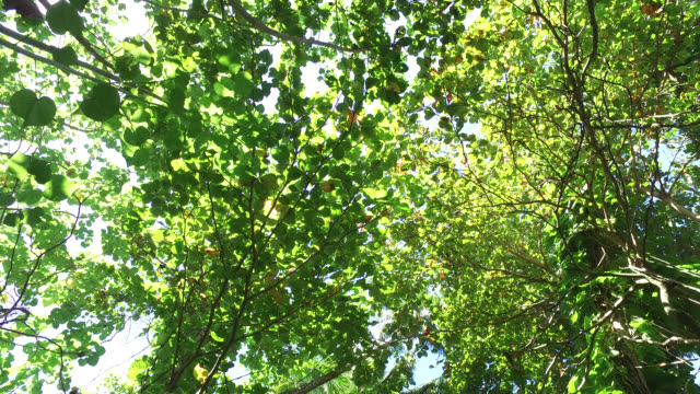 Treetops seen from a low angle
