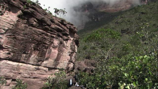 trekking in forest in guiana highlands  - tafelberg felsformation stock-videos und b-roll-filmmaterial
