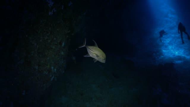 vídeos y material grabado en eventos de stock de peces jurel nadando en la caverna oscura - deep sea diving