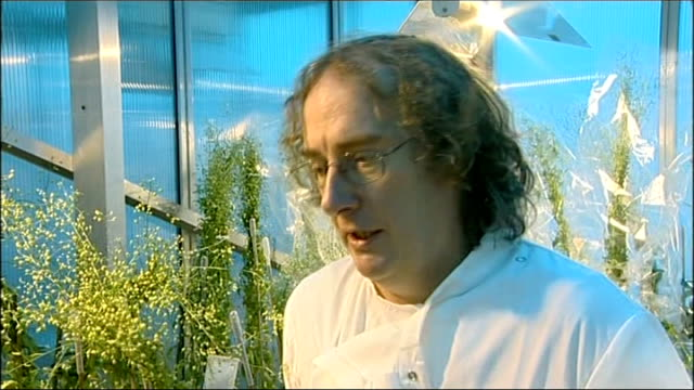 vidéos et rushes de trials of new gm crop containing fish oil could begin in hertfordshire; hertfordshire: rothamsted research: int scientist at work close shot tiny... - pince chirurgicale