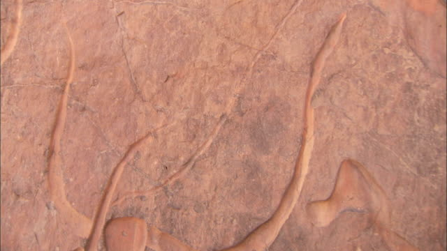 Tribal carvings on desert rock. Available in HD.