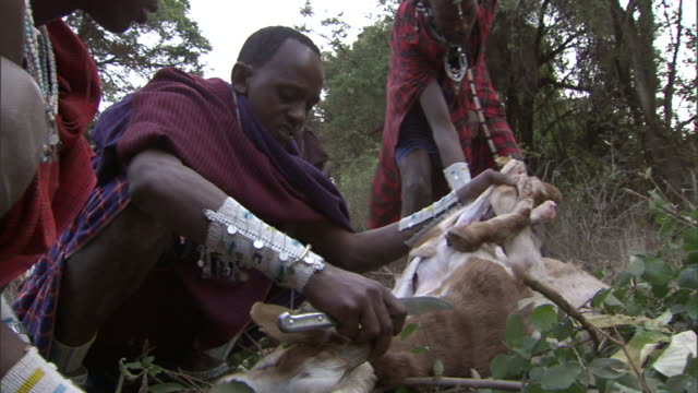 tribal hunters work together to skin and clean a deer. - 動物を使うスポーツ点の映像素材/bロール
