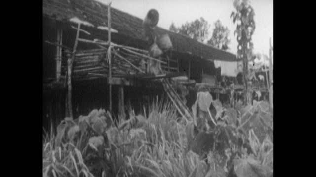 las tribesmen carrying baskets up steps into house; 1963 - サラワク州点の映像素材/bロール