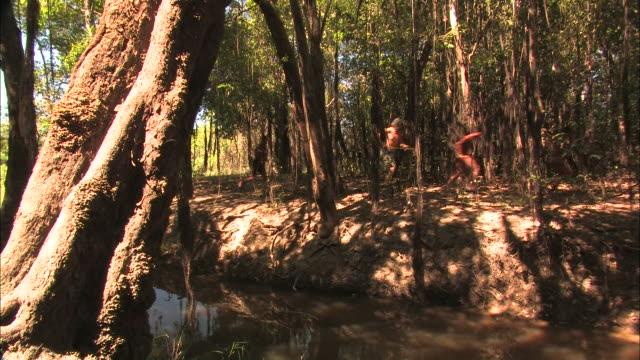 tribesmen run through a forest. - indigene kultur stock-videos und b-roll-filmmaterial