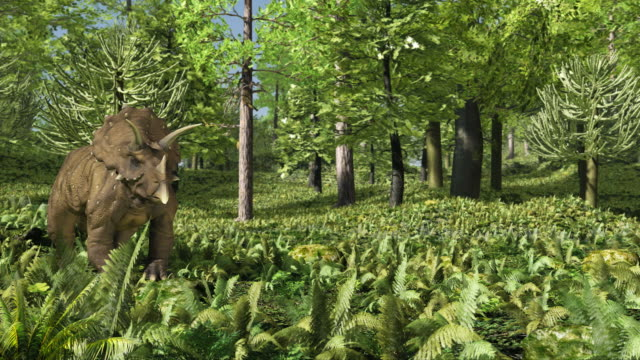 triceratops - herbivorous stock videos & royalty-free footage
