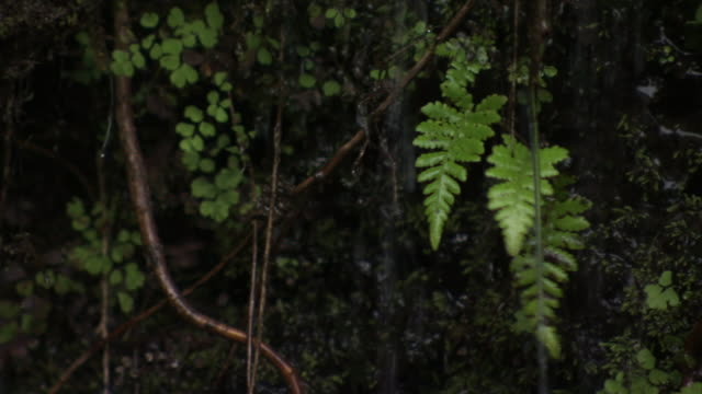 trickling rainwater falls around tropical plants in hawaii. - flowing water stock videos & royalty-free footage