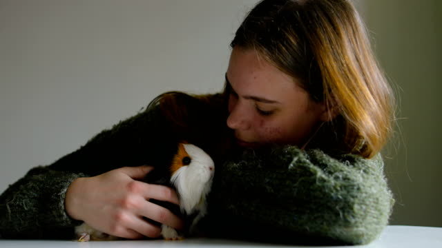 Tricolor guinea pig in my arms