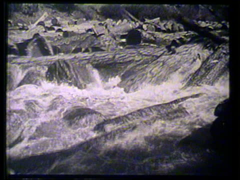 trimmed tree trunk logs moving over short falls in river, giant tree trunk rolling into lumber mill, machine debarking, stripping, automated saws... - 木材産業点の映像素材/bロール