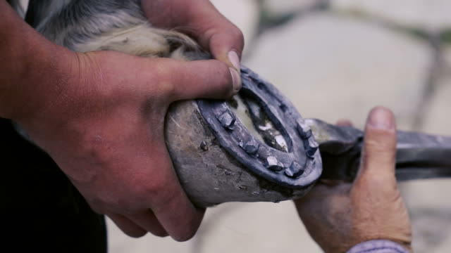 vidéos et rushes de trimming, cleaning, shaping and cutting the excess sole tissue off the horse's hooves using knife in blacksmith shop. - fer à cheval