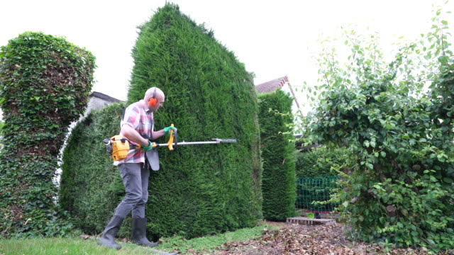 trimming hedge - pruning stock videos & royalty-free footage