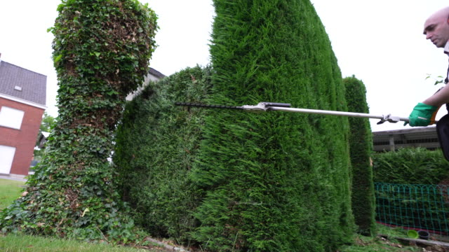 trimming hedge - gardening glove stock videos & royalty-free footage
