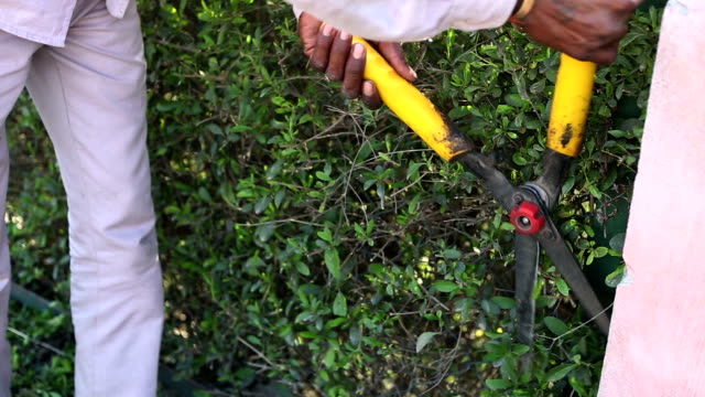 trimming  plant by using pruning shears - pruning shears stock videos and b-roll footage
